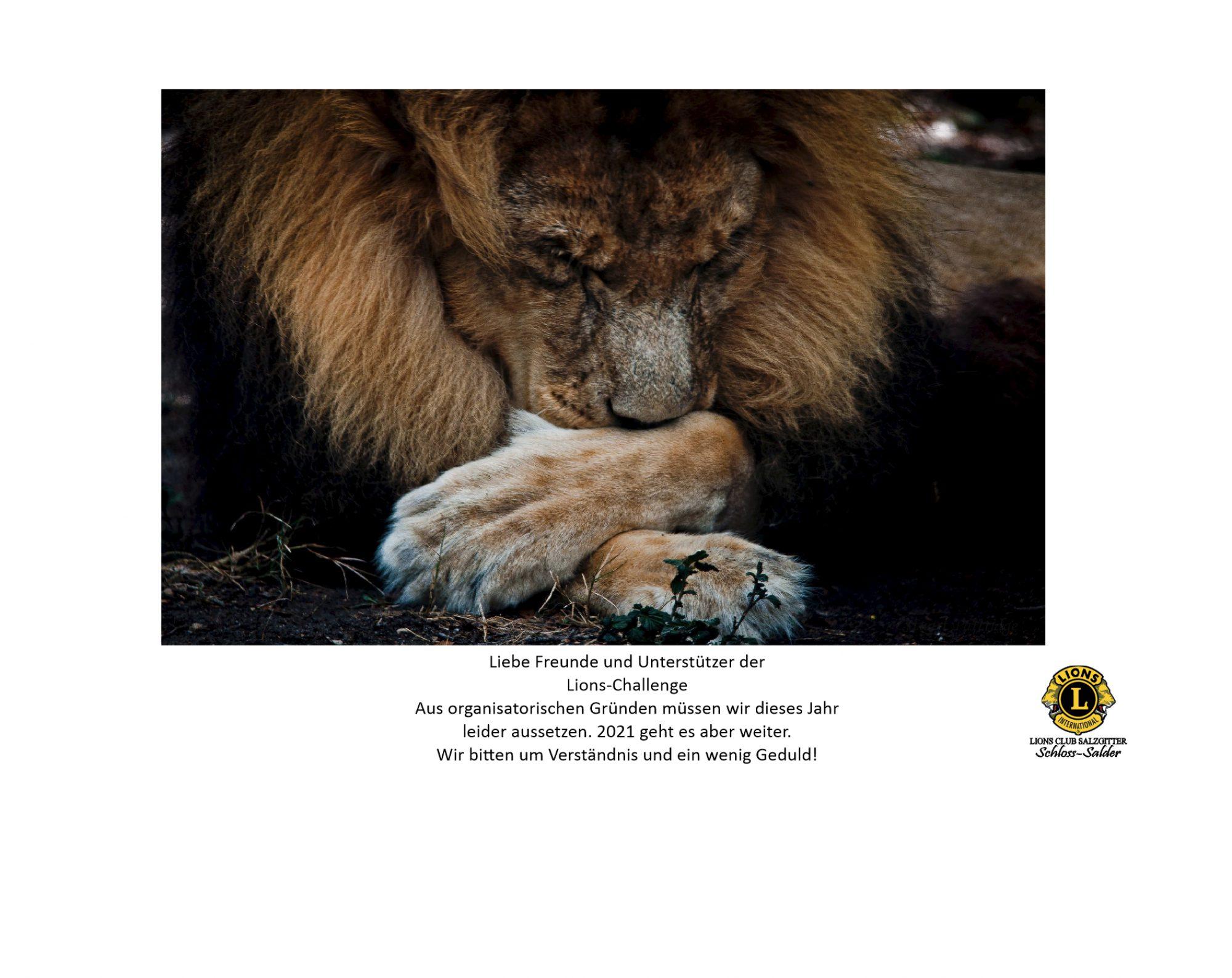 Lions-Challenge